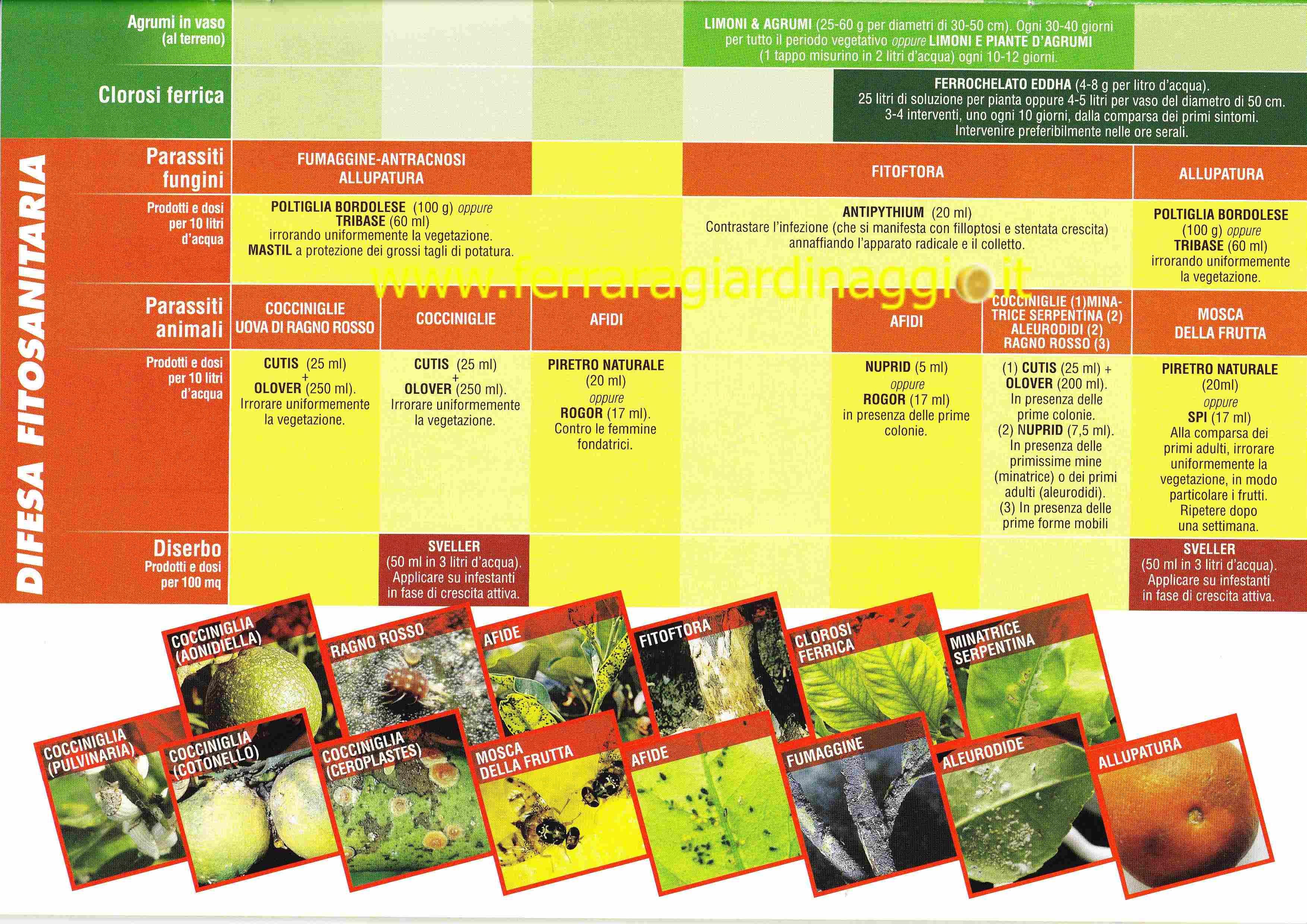 Calendario Concimazione Agrumi.Calendario Concimazione Agrumi