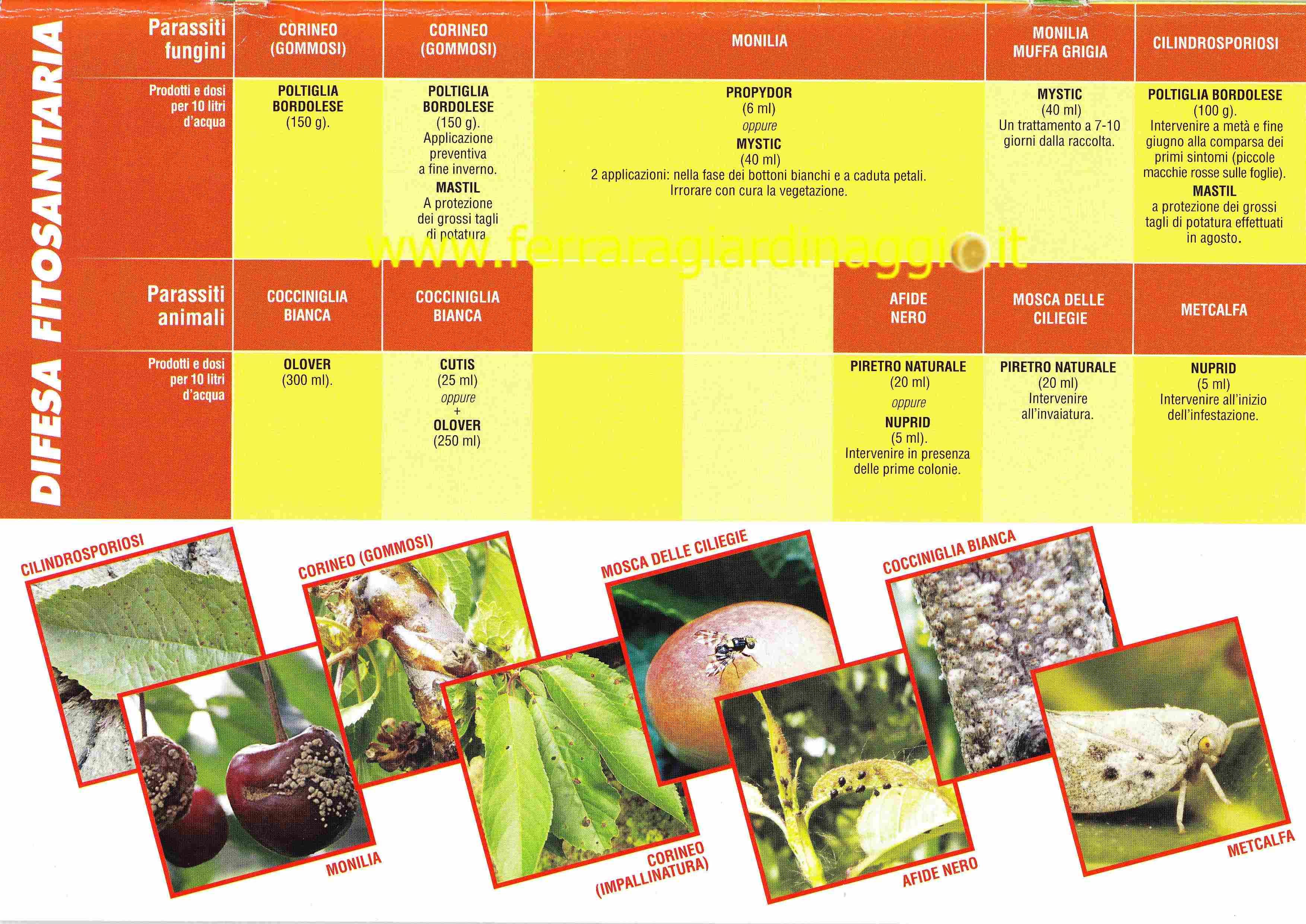 Trattamenti Ciliegio Calendario.Www Ferraragiardinaggio It Calendario Interventi